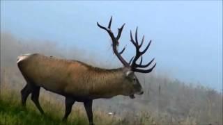Видео проект о разнообразии родного края. Природа Дагестана.