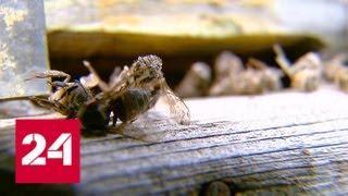 Россельхознадзор проконтролирует применение пестицидов - Россия 24