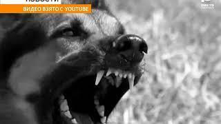 В Бирском районе карантин по бешенству. Ветеринары назвали причину