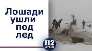 В Башкирии спасали лошадей, которые ушли под лед