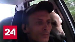Полицейский подобрал на трассе двух собак и вернул их хозяину - Россия 24
