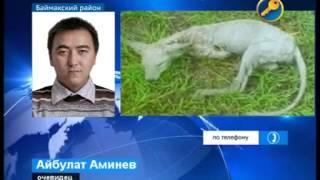Неизвестное существо массово убивает скот в Башкирии