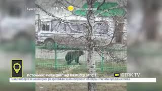 В Башкирии медведя оставили привязанным на улице