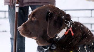 Новости UTV. Социальный эксперимент с собакой-поводырем