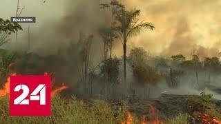 Белые люди будут драться за воду: к чему приведут поджоги в Амазонии - Россия 24
