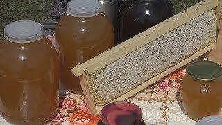 UTV. Курултай спасает мед. Что башкирские депутаты сделают с массовой гибелью пчел