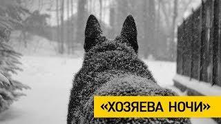 Волки держат в страхе жителей деревень в Городокском районе