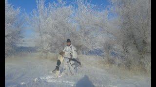 Охота на волков и лисиц