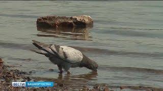 На территории Башкирии сохранится аномальная жара
