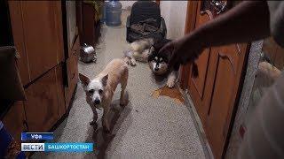 Зооскандал в Уфе: тринадцать собак выселили из квартиры