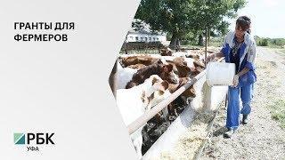 """В РБ увеличили максимальный размер гранта """"Агростартап"""" с 3 млн руб. до 5 млн руб."""