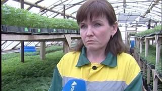 В Уфе «Горзеленхозом»  выращено 300 тысяч саженцев