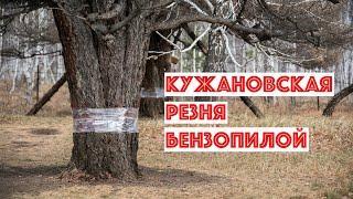 Убийство Кужановских лиственниц. Южный Урал. Башкирия