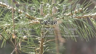 Погода в Сибае сегодня 29 января 2020. На завтра, неделю