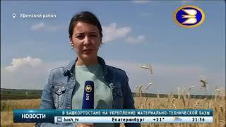 БСТ.Новости, 06.08.2018 - В Башкортостане выводят сорта ржи для производства полезного хлеба