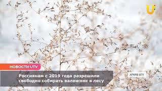 Новости UTV. Сбор валежника в лесах
