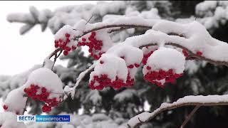 На Башкирию надвигаются сильные порывы ветра и метель