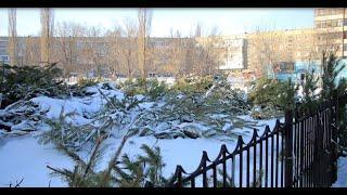 Новости UTV. Утилизация хвойных деревьев