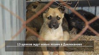 UTV. Новости запада Башкирии за 4 апреля