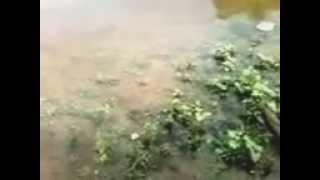 паводок в Башкирии, разлив реки в середине лета