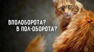Активный словарь - 04.04.19
