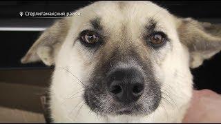В Башкирии женщина устроила смертельный приют для животных