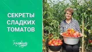Секреты сладких помидоров