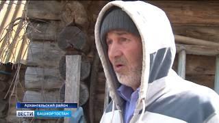 В Башкирии пчелы насмерть зажалили собаку