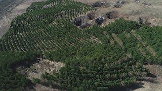 Как восстанавливают башкирский лес