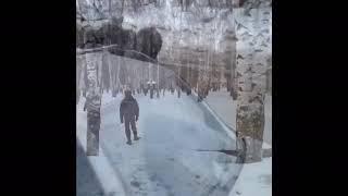 Лоси в городах Октябрьском и Нефтекамске