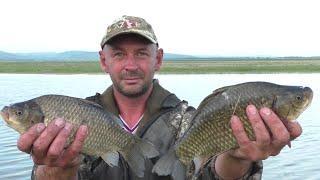 Супер рыбалка на огромного карася! Бонусный САЗАНЧИК! Рыбалка в Сибири, КВХ 2020. Рыбалка на донку!