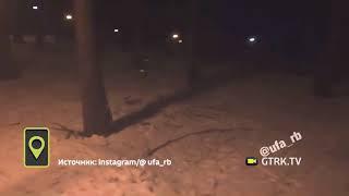 Две лисицы устроили догонялки возле Президент Отеля в Уфе