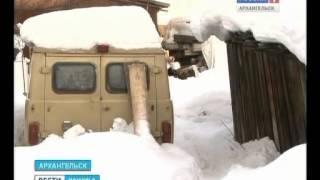В Исакогорском округе волки загрызли домашнюю собаку