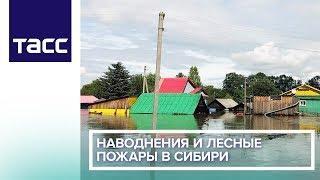 Наводнения и лесные пожары в Сибири