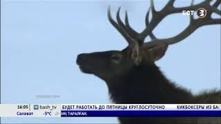 В Башкирии опровергли информацию о нашествии волков