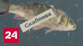 Шутки и пародии: предвыборная кампания на Украине прошла в стиле Зеленского - Россия 24