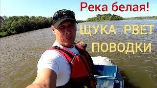 рыбалка на реке Белой! ЩУКА рвет поводки!