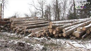 Индивидуальный предприниматель осужден за незаконную рубку леса