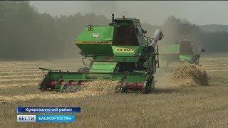 Зной и жара могут оставить без урожая зерновых четыре района Башкирии