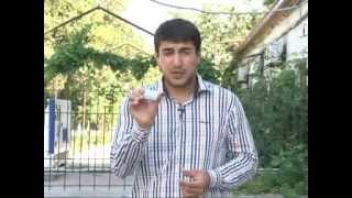 В Дагестане обнаружено 35 тыс. кустов конопли