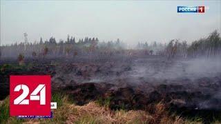 МЧС: чиновники усугубили ситуацию с пожарами, но первопричина не в них - Россия 24