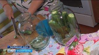В одном из районов Башкирии – небывалый урожай огурцов