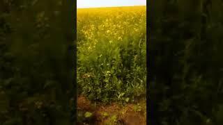 Гибель пчел и СНТ Рассвет Стерлитамакский район