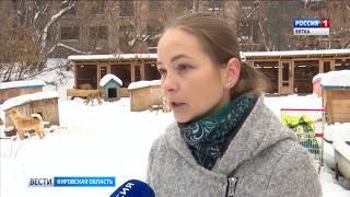 Новые правила отлова собак(ГТРК Вятка)