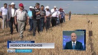 Новости районов: спасение реки Таналык и выбор сорта пшеницы для Зауралья