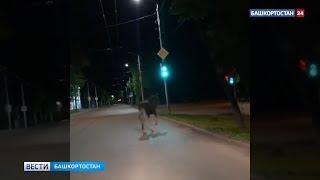 Не показалось: еще в одном городе Башкирии разгуливал лось