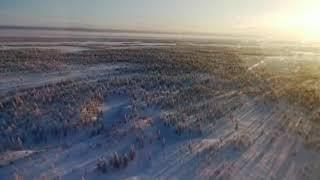 Стая волков из Казахстана движется в сторону Курганской области