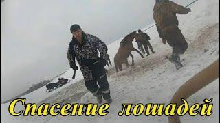 """""""Дура, выход там!"""": захватывающее дух спасание лошадей из ледяной ловушки.Полное видео"""