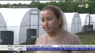 В Респулике Башкортостан высадили в теплицы черенки безвирусного картофеля