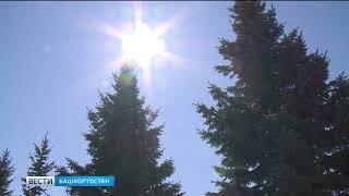 В Башкирию пришла стабильно жаркая погода